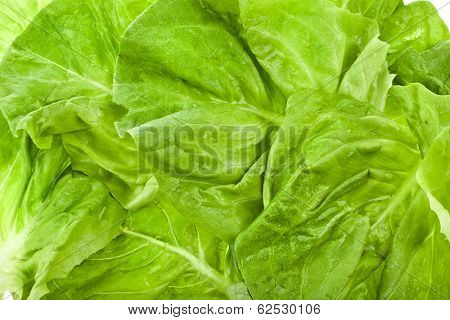 Wet Lettuce Salad Isolated Surface Top View Close up