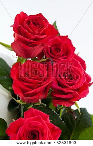 close up of red rose on white background
