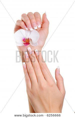 Frau Hand mit Französisch Maniküre halten die weiße Blume