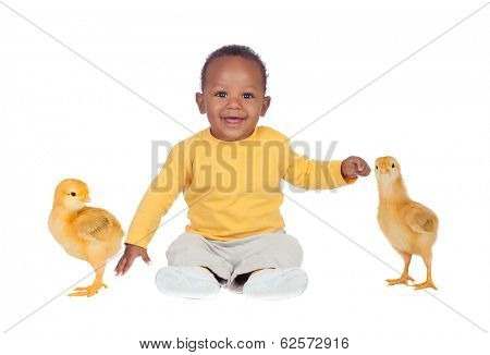 Adorable african baby sitting with two little yellow chickens isolated on a white background