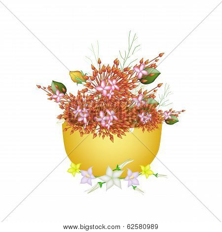Ixora, Egg Plant Flower and Burmuda Grass in A Bowl