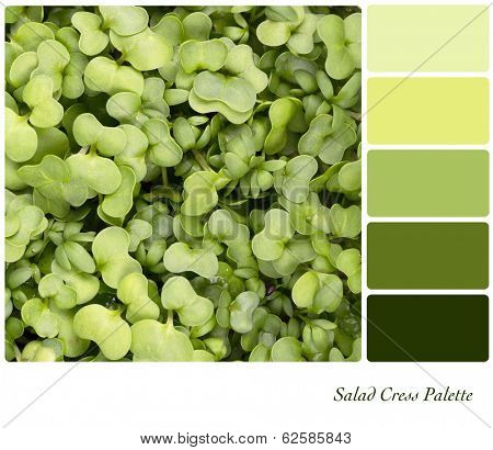 A background of fresh salad cress in a colour palette with complimentary colour swatches