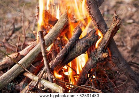 Bonfire  In Forest, Camp