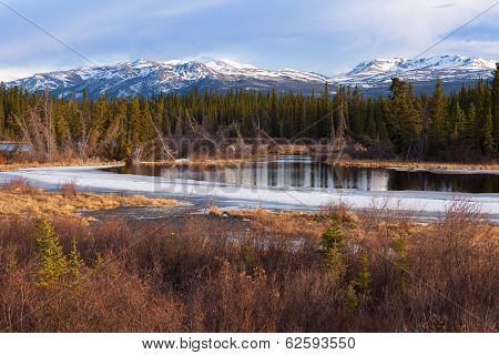 Yukon Taiga Wetland Marsh Spring Thaw Canada