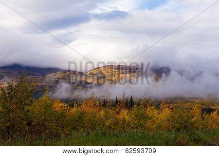 Foggy Fall Boreal Forest Taiga Hills Yukon Canada