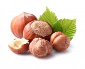 picture of cobnuts  - Hazelnuts with leaf - JPG