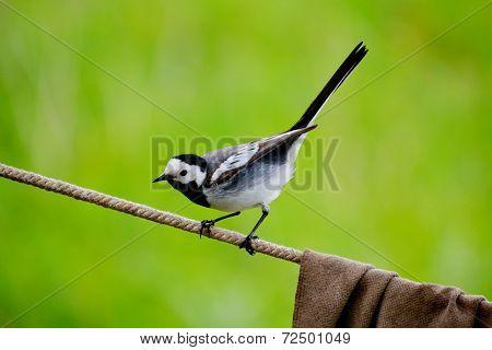 Birds Altaya