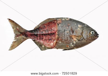 Fresh fish isolate on white back ground, Fillet of Fish, Healthy food, Fresh fish from sea