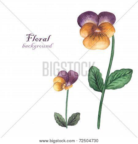 Vector Watercolor Flowers Pansies