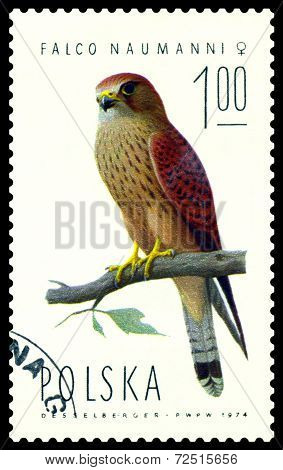 Vintage  Postage Stamp. Falcon  Naumanni  Female.