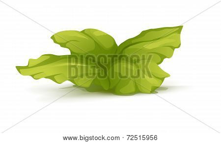 Bush Plant With Large Leaves