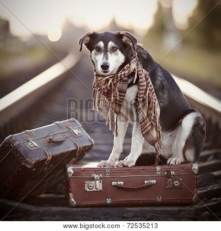 The Dog Sits On A Suitcase On Rails