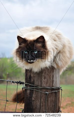 beautiful barn cat on fence post
