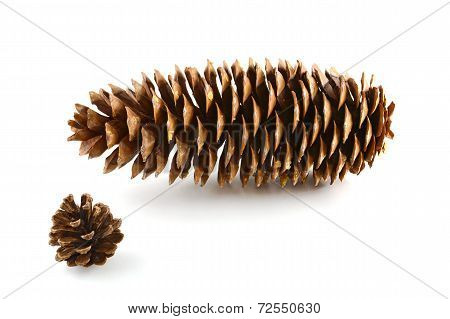 Sugar Pine Cone And Lodgepole Pine Cone