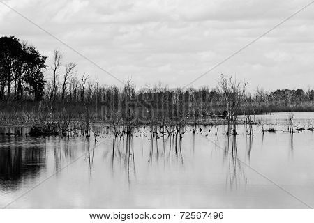 Marsh Reflections
