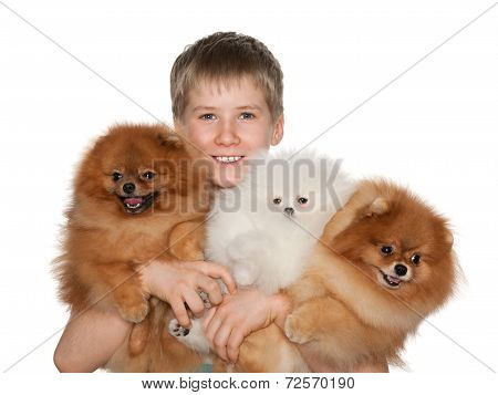 Boy Holds Three Pomeranian Spitz