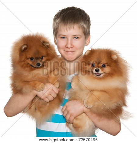 Boy Holds Two Pomeranian Spitz