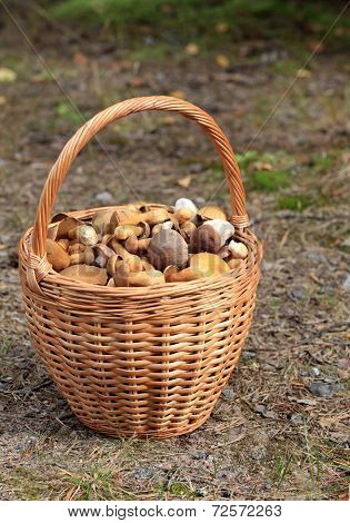basket  mushrooms