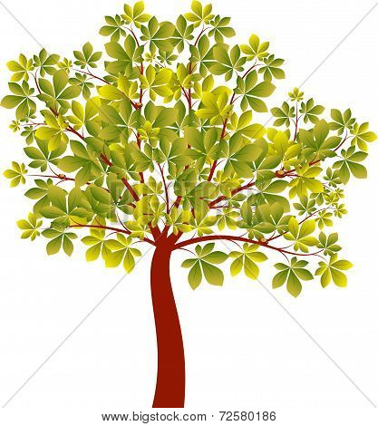 Green Chestnut Tree, Tree Vector