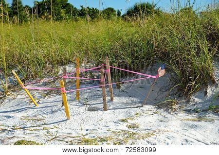 Protected Turtle Nest