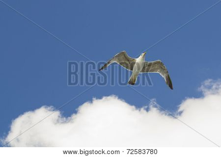 seagull at blue sky