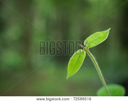 Young Sprout On Green Background