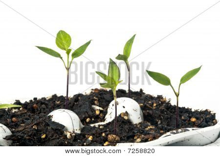 Starting Vegetables From Seeds