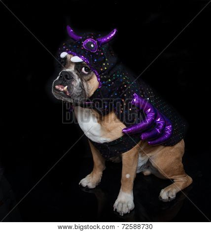 Bulldog dressed for Halloween