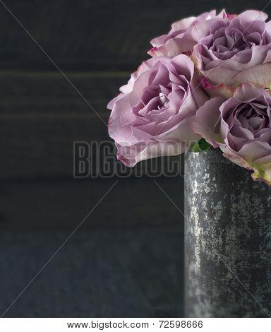 Purple Roses1