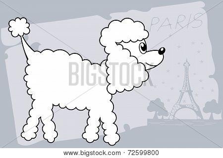 poodle dog drawing