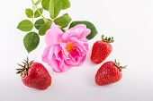 picture of bent over  - On a white background three strawberries bent over them big flower beautiful rose.