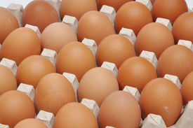 image of chucky  - eggs in a protective container close up photo - JPG