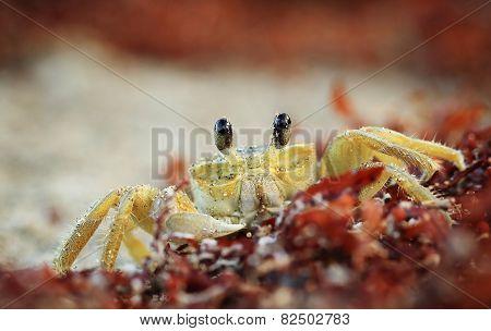 Crab on sand beach