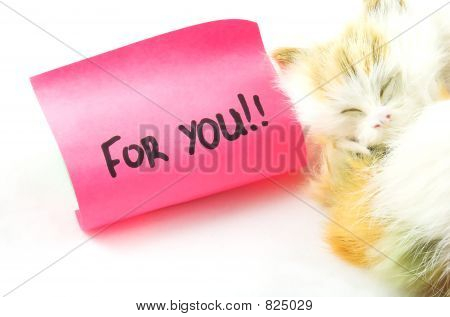 cat and message