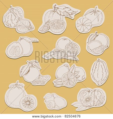 Citrus Collection On Tags In Sketch Style