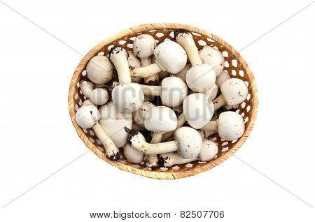Raw White Wild Mushrooms Champignons Agaricus In Basket