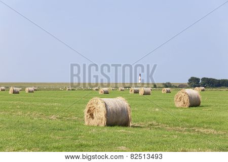 Hay Round Bales On Meadow
