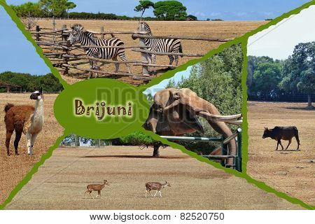 Brijuni National Park Safari Collage