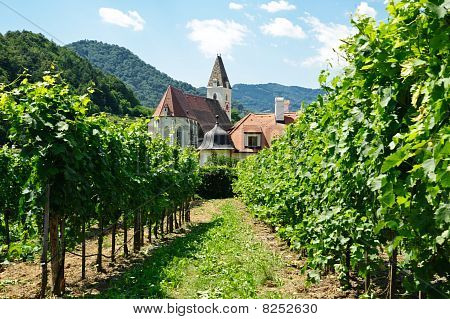 Church Between Vine Branch
