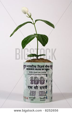 a 100 rupee indian currency note with a growing plant