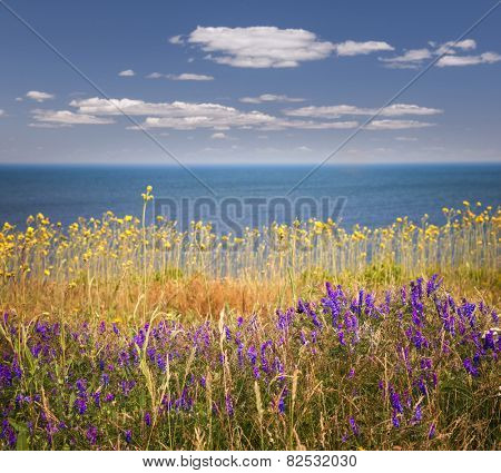 Wildflowers and grasses on Atlantic ocean shore of Prince Edward Island, Canada.