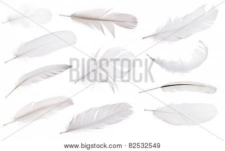 set of light grey feathers isolated on white background