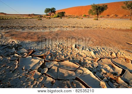 Desert landscape with cracked mud, Acacia trees and red sand dunes, Sossusvlei, Namibia