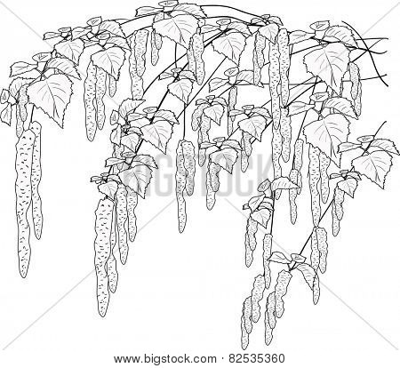 illustration with spring birch branches sketch isolated on white background