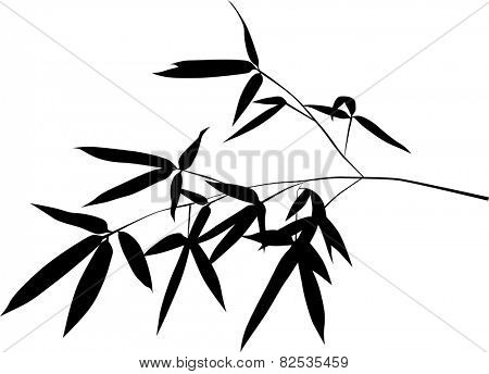illustration with black bamboo branch isolated on white background