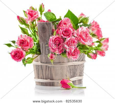 Bunch pink roses in wooden bucket. Isolated on white background