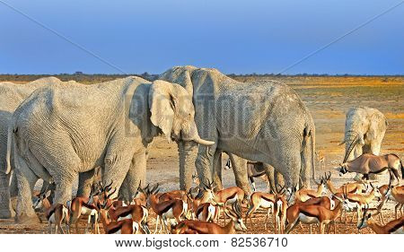 Elephants and Springbok at a waterhole