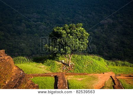 View from Sigiriya Lion Rock Fortress in Sri Lanka