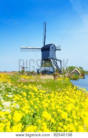 Kinderdijk watermill over spring yellow flowers