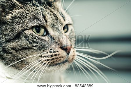 Cute cat face portrait, looking at something. Adorable kitten series.